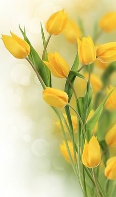 yellow tulips....for spring and Happy Easter!