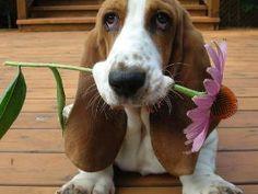 I love hounds!