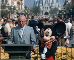 Happy Birthday to Walt Disney World   The Disney Blog  Happy Birthday, WDW and thank you