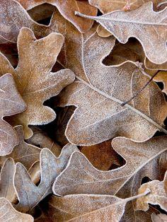 #beige #autumn #frost
