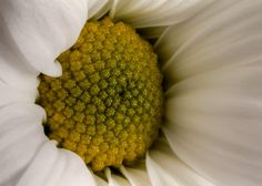 White Yellow  by @Doug88888, via Flickr