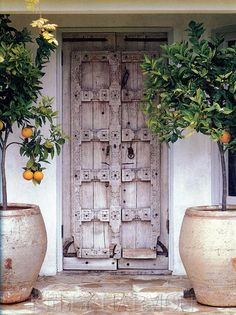 Potted orange trees flank an antique Mexican door