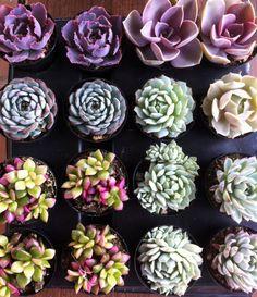 Succulent Plants - 30 Party Pack  For Terrariums, Wedding, Favors, Centerpieces, Boutonnieres and More. $60.00, via Etsy.
