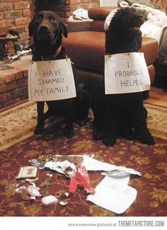 Sounds about right for my dogs.