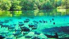 As belezas naturais de Bonito- Mato Grosso do Sul