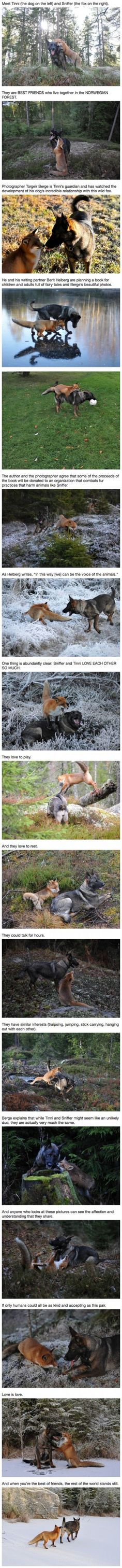 Real-Life Fox And The Hound Best Friends Will Melt Your Heart