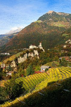 View of the Tirolo Castle and vineyards in Italy