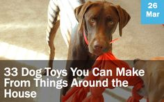33 Dog Toys You Can Make from Things Around the House #dogs #crafts