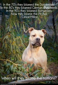 When will they blame the humans? Cesar Milan