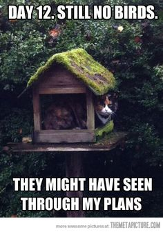 And this is why we don't have a bird house outside...