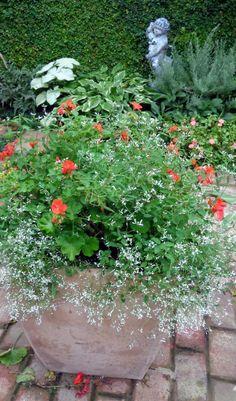 Container Gardening | Garden Calling