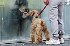 March 14, 2011. A girl who has been isolated at a makeshift facility to screen, cleanse and isolate people with high radiation levels, looks at her dog through a window in Nihonmatsu, northern Japan, after a massive earthquake and tsunami that are feared to have killed more than 10,000 people in March.    (Yuriko Nakao-Reuters)