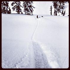Snowboarding or skiiing for cardio! via snowboarder magazine.