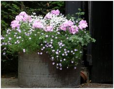 Love the delicate flowers and color with the old galvanized container