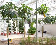 aeroponic indoor gardening on http://www.aeroponichowto.com