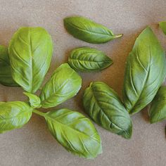 Guide to Basil | CookingLight.com