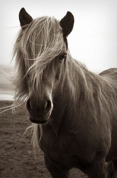 Mr. Trendy pony