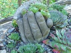 make your own hand container for your succulents = fill old work glove with cement mixture, all it time to set up,,,cut off  and the rest is planting history