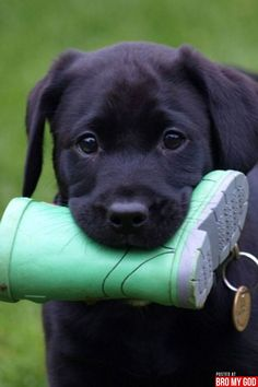 Everything about this picture is adorable, right down to the tiny rain boot.