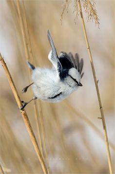 ^ animals, beauti bird, feather friend, brian andreas, little birds, art, sergei tarasenko, branches, blues