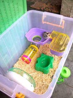 Diy dwarf hamster cages