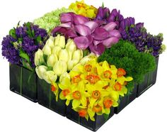 Purple hyacinth, purple tulips, lavender calla lily, green carnations, cream tulips, green trachelium and daffodils