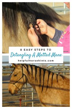 8 Steps to Detangle
