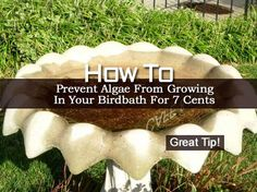 How To Prevent Algae From Growing In Your Birdbath For 7 Cents -...