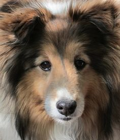 My dog Lucy. Jeannie, Santa Fe, New Mexico. 7/25/12