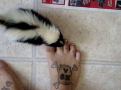Pet Skunk crying because he wasnts to be picked up.