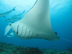 Diving Hot Spots Along Australia's East Coast - Off the Beaten Path