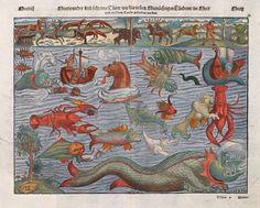 Plate (c 1544) compiling various sea monsters from the Carta Marina, the 16th century map of the Nordic countries and waters. Early map makers would often populate the seas and distant unknown lands with monsters. In this realm of 'Here-be-monsters'  their imaginations were given full rein.