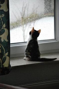 calico cat looking at the rain