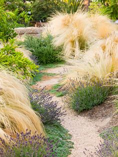 ornamental grass and perennial plantings