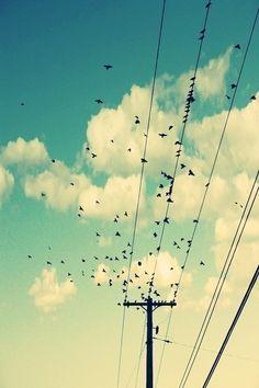 Birds on a wire - Alicia Bock