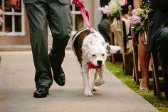 doggie ring bearer! | Caroline + Ben #wedding