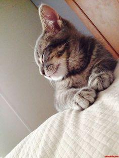 Yoda Our Little Beauty. - http://cutecatshq.com/cats/yoda-our-little-beauty/