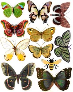 Butterflies images for decoupage or drawings.