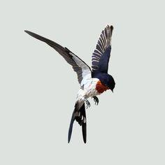 Birds Paper Sculptures
