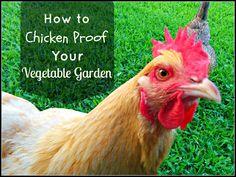 Greneaux Gardens: How to Chicken Proof a Vegetable Garden