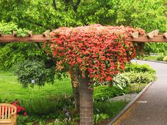 Hometalk :: What Flowering Vines Are Best For Your Zone?