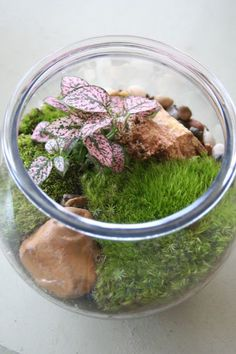 A whole article on Houzz about making a terrarium.  Great stuff here.