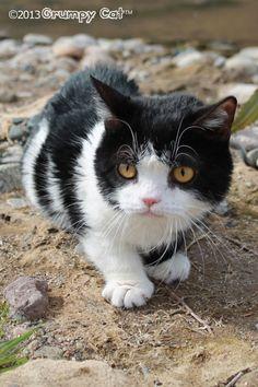 I'm outside...just poking along.-Grumpy Cat Pokey