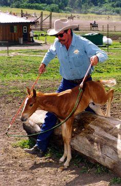 Pat Parelli Natural Horsemanship: Early foundation! parelli natural horsemanship, natur horsemanship