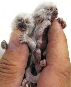Tiny tiny.
