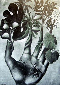 La main de Nostradamus by Félix Labisse, 1943  #art