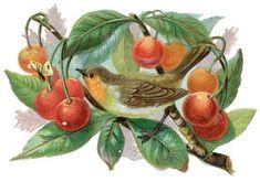 The Vintage Moth..: berries