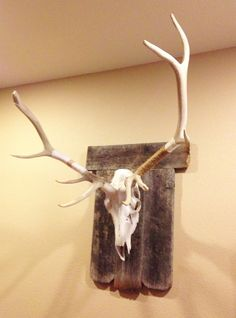 antler, barnwood, barn wood