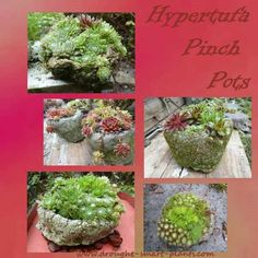 Hypertufa Pinch Pots are the perfect rustic container for hardy succulents of all kinds...