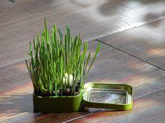 Altoids Tins Garden by Marque Cornblatt,gomistyle #Altoids_Tin_Garden #gomistyle #Marque_Cornblatt gomistyl marquecornblatt, idea, altoidstingarden gomistyl, marqu cornblattgomistyl, altoid tin, gardens, tin garden, altoids tins, altoid plant